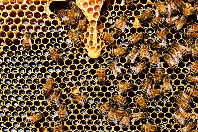 Gelee Royale: Die königlichen Säfte der Bienen
